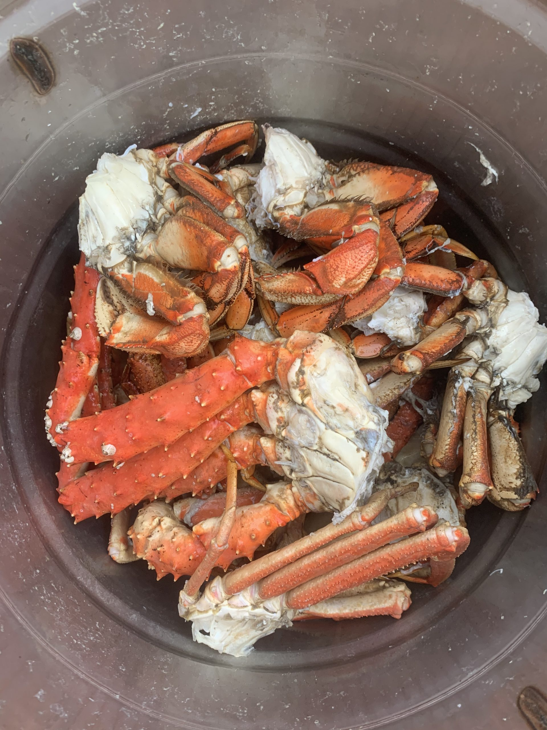 What is the difference between Dungeness and Snow Crab