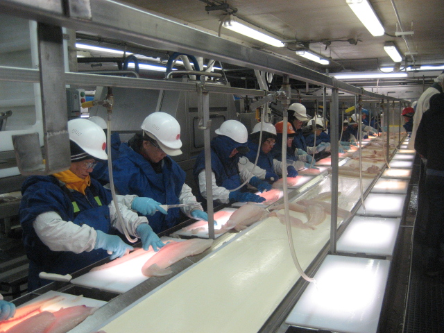 What a seafood factory is like in Alaska
